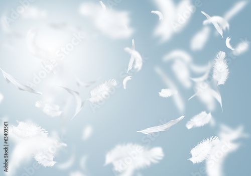 Obraz White feathers - fototapety do salonu