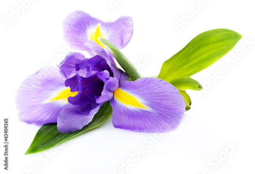 Poster de jardin Iris Beautiful iris flower isolated on white