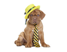 Puppy With Yellow Necktie And ...