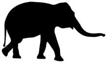 Silhouette Elephant