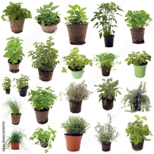 Fototapeta aromatic herbs obraz