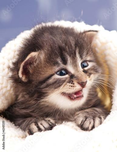 Fototapety, obrazy: Cute kitten