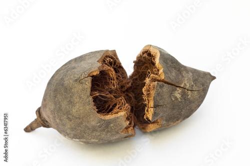 Keuken foto achterwand Baobab Frutto del baobab (Adansonia digitata)