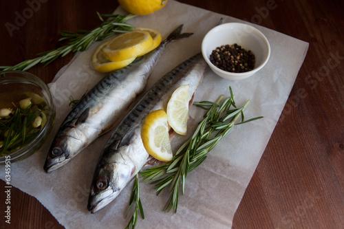 Mackerel Fish (Scomber scrombrus)