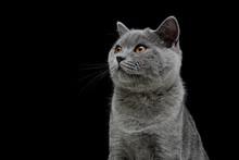 Kitten On Black Background Close Up