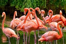 Flamingos Am Wasser
