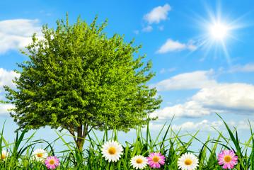 Naklejka Idyllische Wiese bei schönstem Wetter