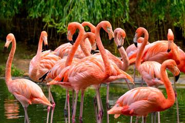 Fototapeta Ptaki Flamingos am Wasser