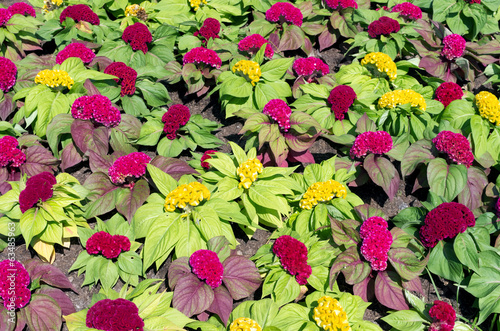 Valokuva  flower garden