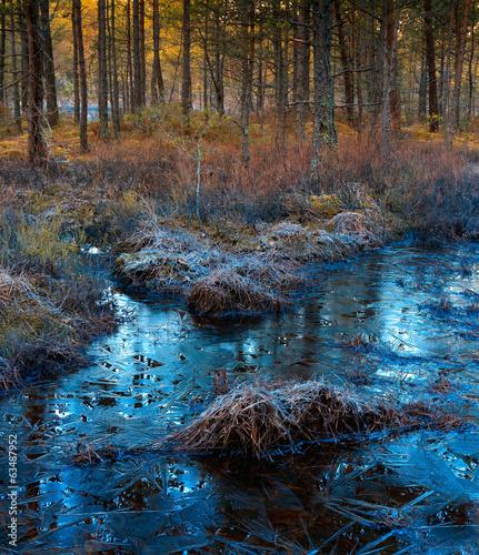Wiosenny Świt w Dzikim Lesie