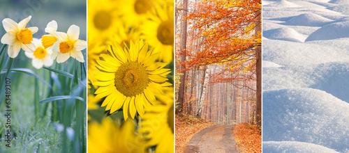four seasons Fototapet