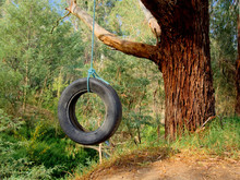 Car Tyre Swing With Blue Rope Hanging On A Gum Tree