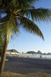 Sunrise Copacabana Beach Rio de Janeiro Palm Tree
