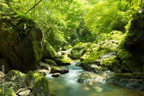 Printed kitchen splashbacks River やんばるの清流(奥間川)