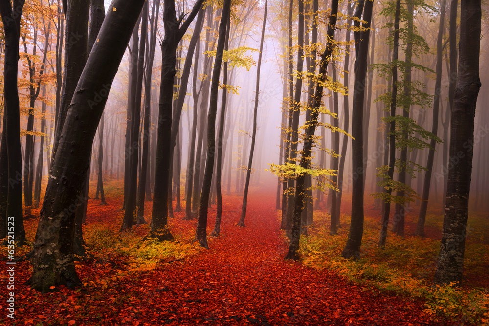 Fototapeta Mysterious foggy forest with a fairytale look