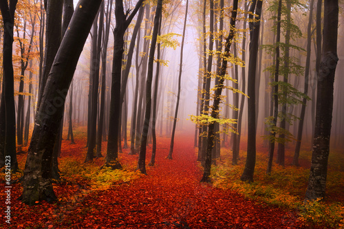 Tuinposter Cappuccino Mysterious foggy forest with a fairytale look