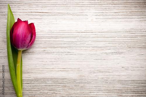 czerwony-tulipan-na-drewnianym-tle