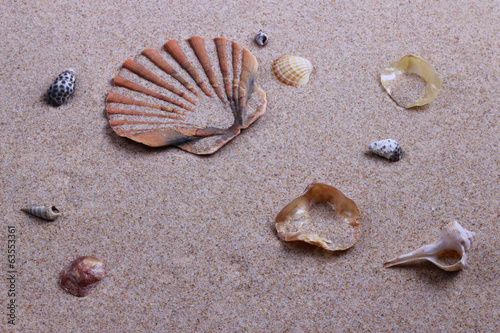Photo PLAYA  Y CARACOLAS. BEACH SHELLS.
