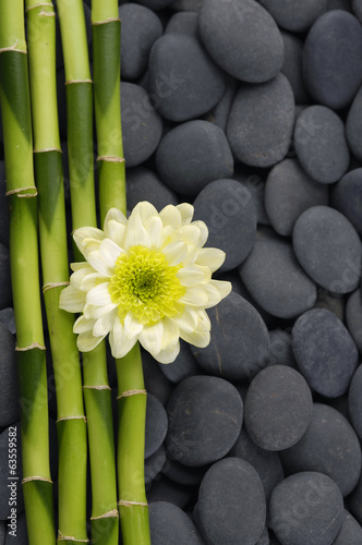 gerbera-i-cienki-bambusowy-gaj-na-tle-kamieni