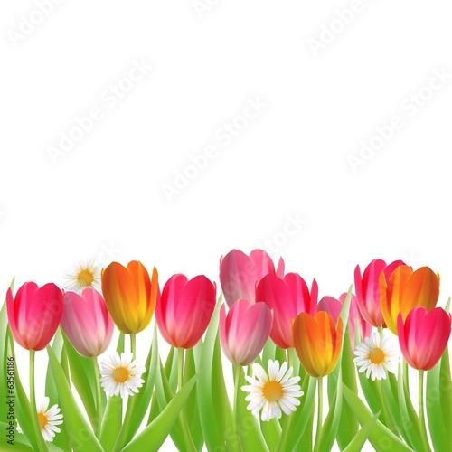 Foto op Plexiglas Tulp postcard with flowers