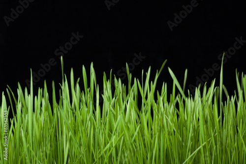 Foto op Plexiglas Landschappen green grass on black background