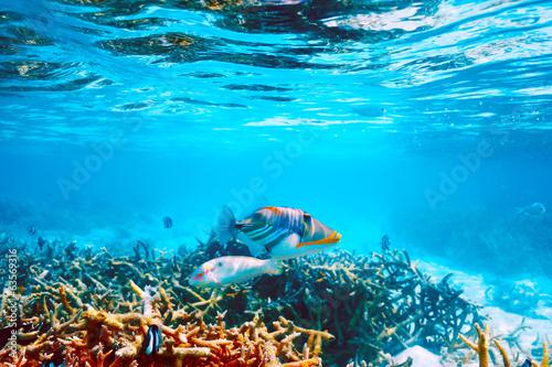Papiers peints Sous-marin Coral reef at Maldives