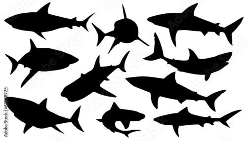 Canvas Print shark silhouettes