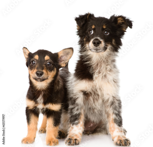 Foto two lying puppy looking at camera. isolated on white background