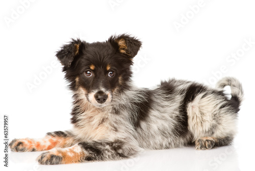 young mixed breed dog. isolated on white background Wallpaper Mural