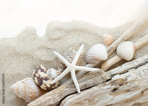 Sea shells, starfish and wood - Tropical travel
