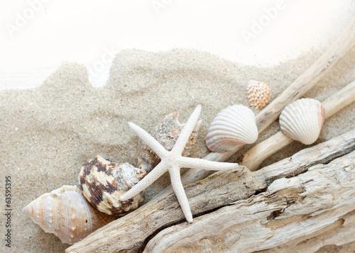 Sea shells, starfish and wood - Tropical travel