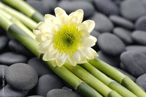 piekna-biala-gerbera-i-cienki-bambusowy-gaj