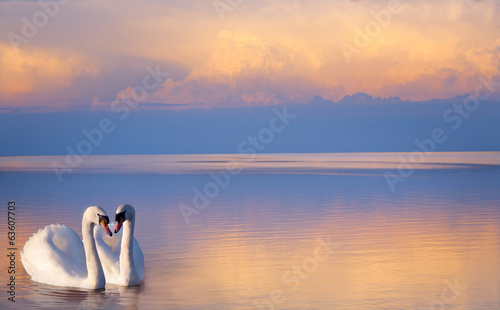 Poster Cygne art beautiful Two white swans on a lake