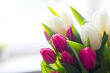 Fototapeta Tulipany - Fresh Tulips