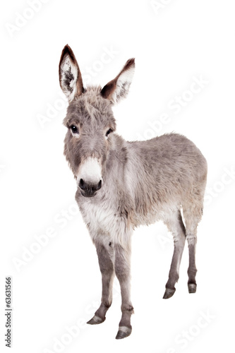 Montage in der Fensternische Esel Pretty Donkey isolated on the white background