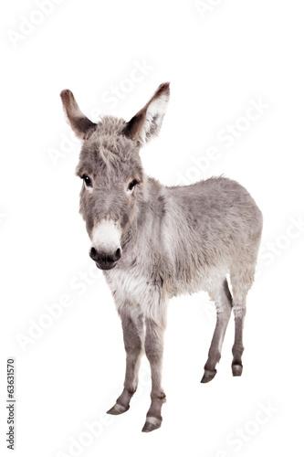 Deurstickers Ezel Pretty Donkey isolated on the white background