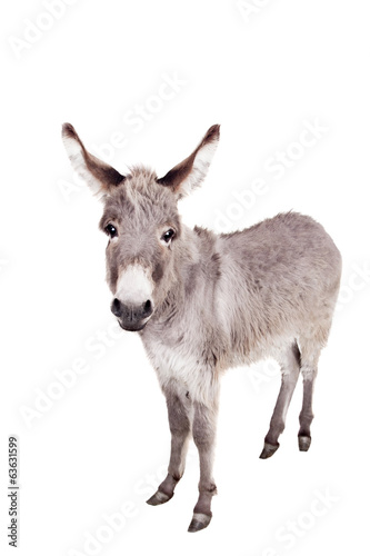 Spoed Foto op Canvas Ezel Pretty Donkey isolated on the white background