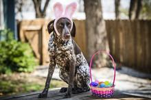 Dog In Bunny Ears