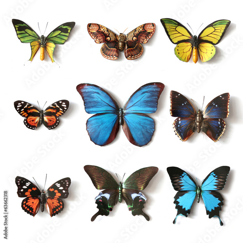 Poster Vlinder Stuffed insects Butterfly collection
