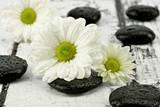 Fototapeta Kamienie - Margaretki z kamieniami do spa
