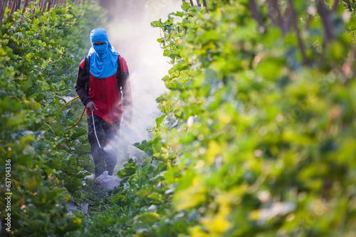 Fotomural  spraying pesticide