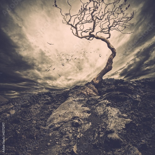 Fototapety, obrazy: Dramatic sky over old lonely tree