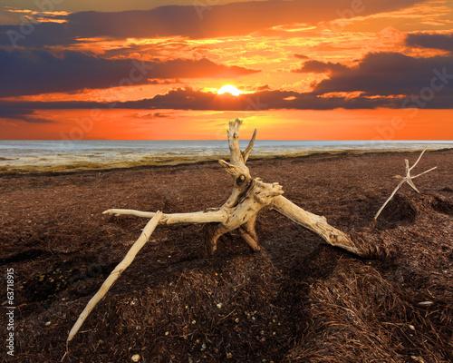 Foto op Plexiglas Landschappen old tree on Sivash dead sea