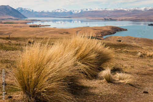 Fotografia, Obraz tussock growing above lake Tekapo