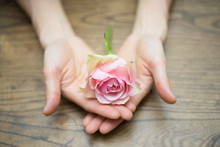 Open Hands Holding Pink Rose On Wood