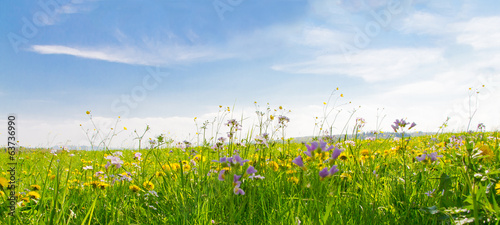 Spoed Foto op Canvas Lente Flower field in springtime