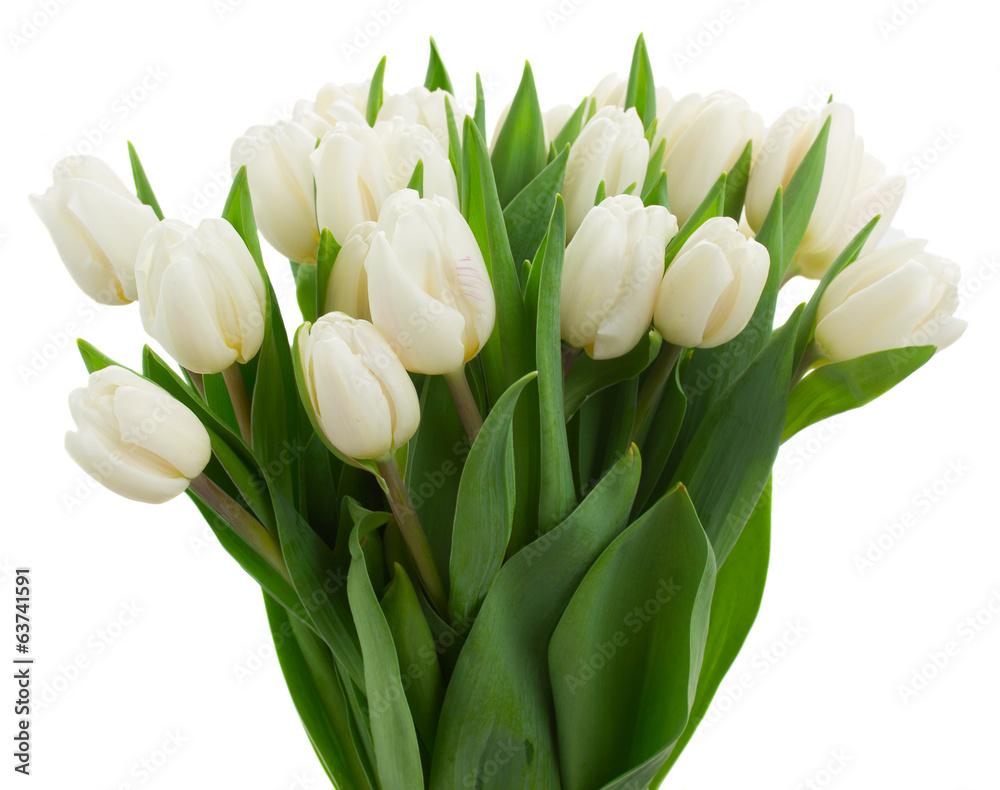 bunch of white tulips