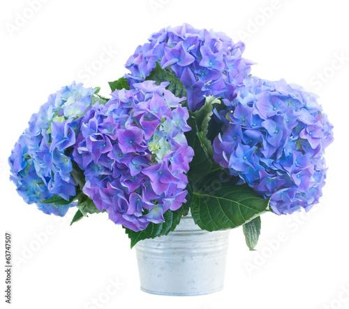 Papiers peints Hortensia posy of blue hortensia flowers