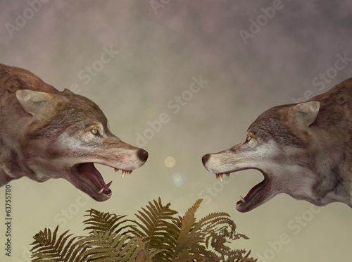 Photo Two wolves. Dialogue.