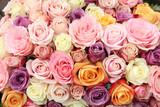 Róże ślubne w pastelowych kolorach - 63757150